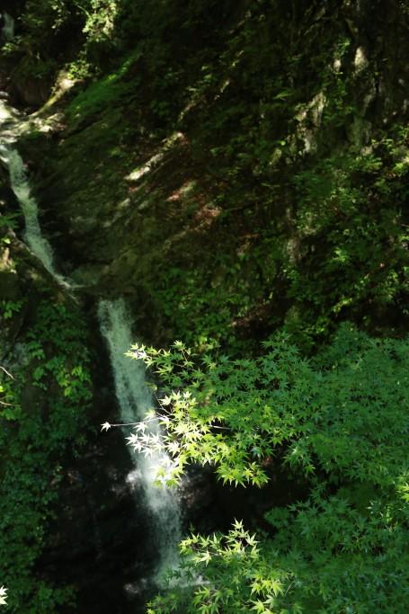 西沢度付近の滝