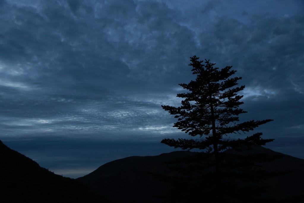 夜明け前の一本木