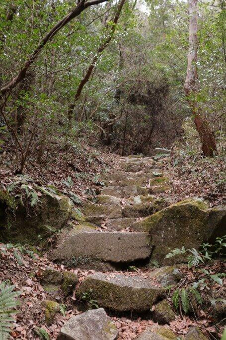 岩巣山 下山道
