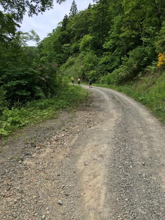 奥飛騨トレイルラン 上りの林道