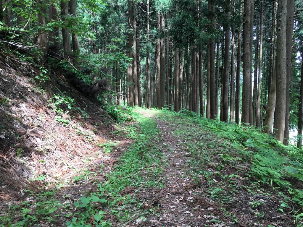 奥飛騨トレイルラン 国道41号線後の登山道
