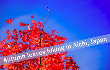 Autumn leaves in Aichi Japan
