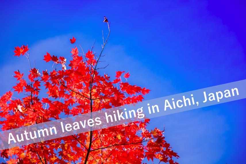 Autumn leaves in Aichi Japan