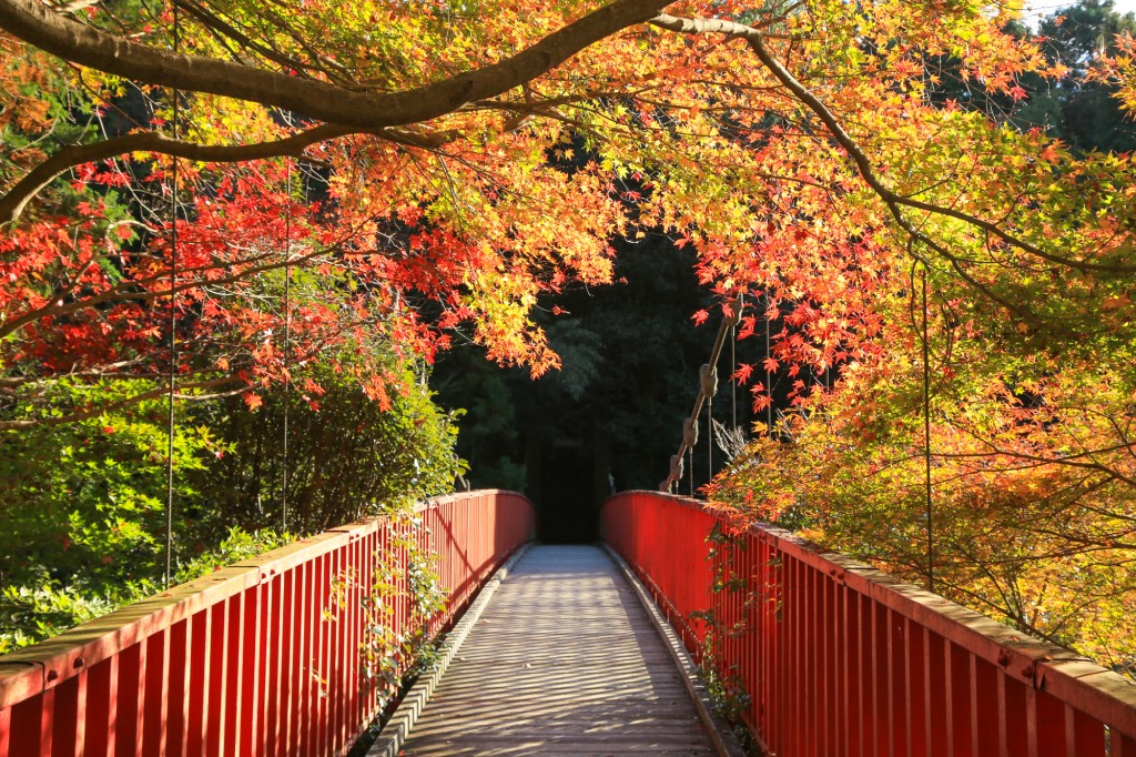 王滝渓谷 中之瀬橋 紅葉