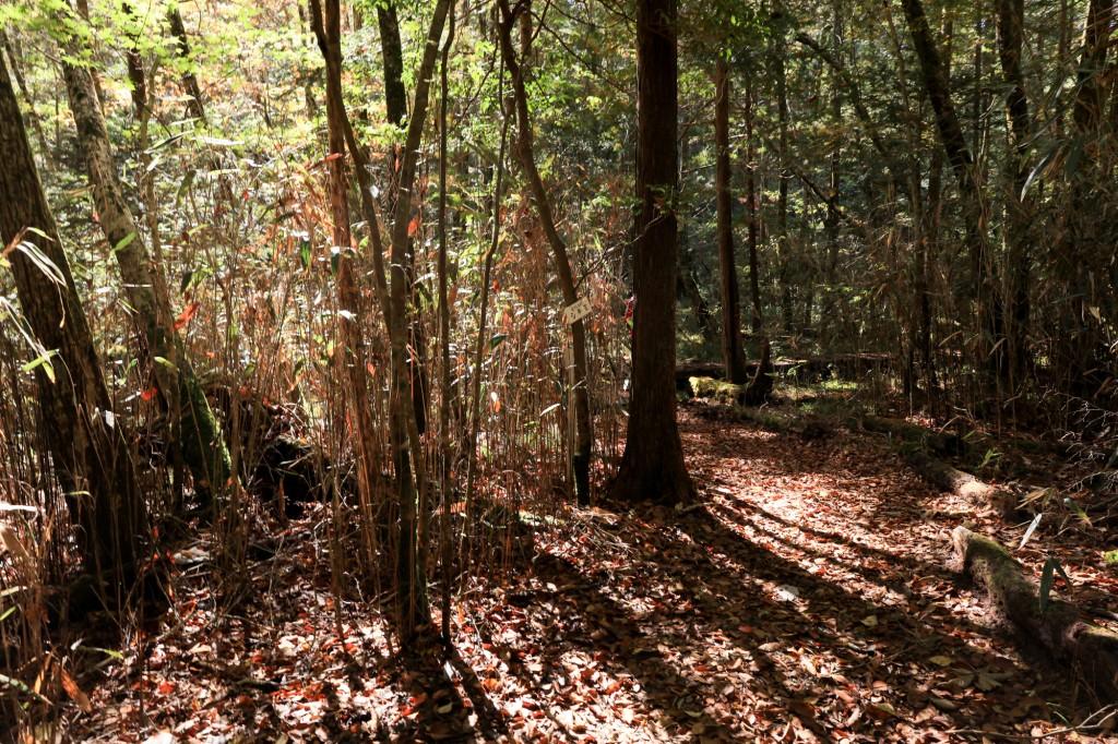 きららの森 森の中