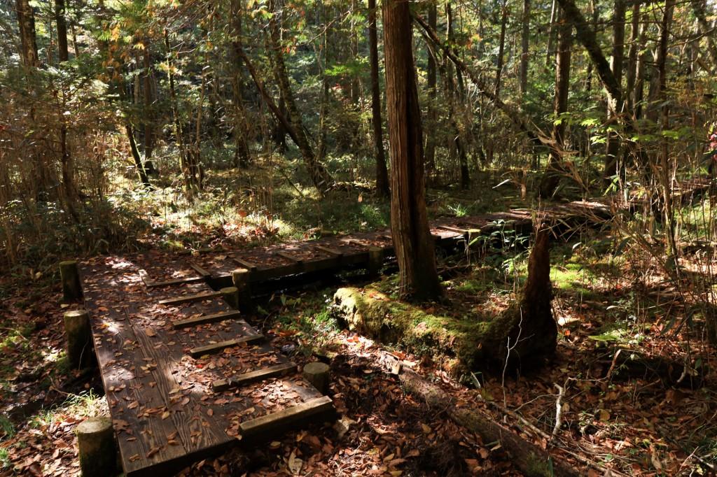 きららの森 湿地帯