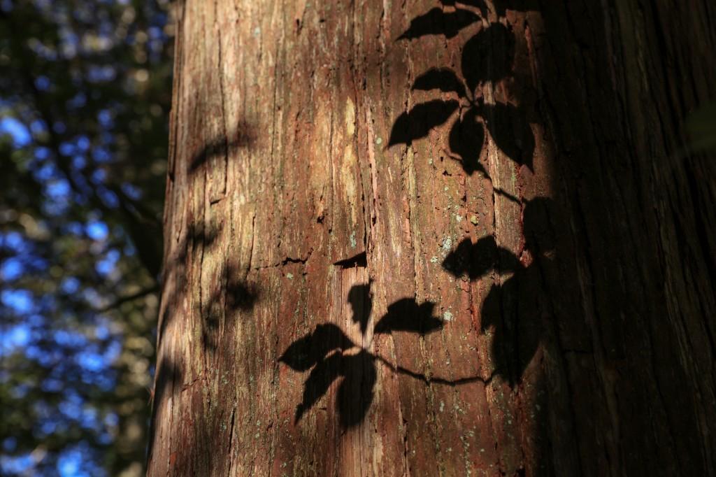 きららの森 葉の影