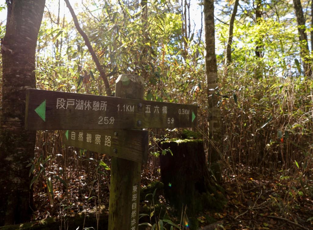 きららの森 分岐3