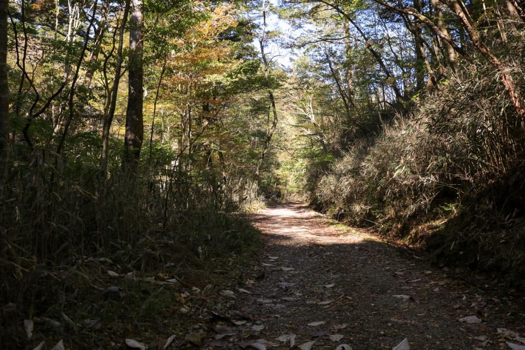 きららの森 林道1