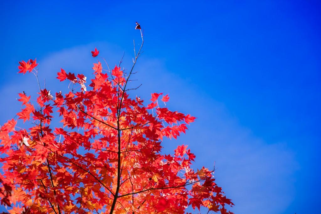 きららの森 紅葉
