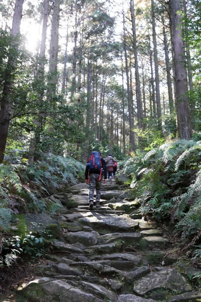熊野古道 馬越峠 石畳1
