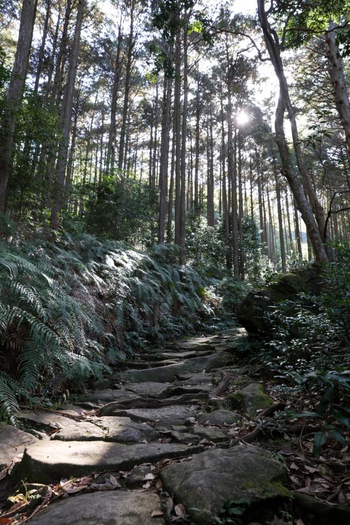 熊野古道 馬越峠 石畳2