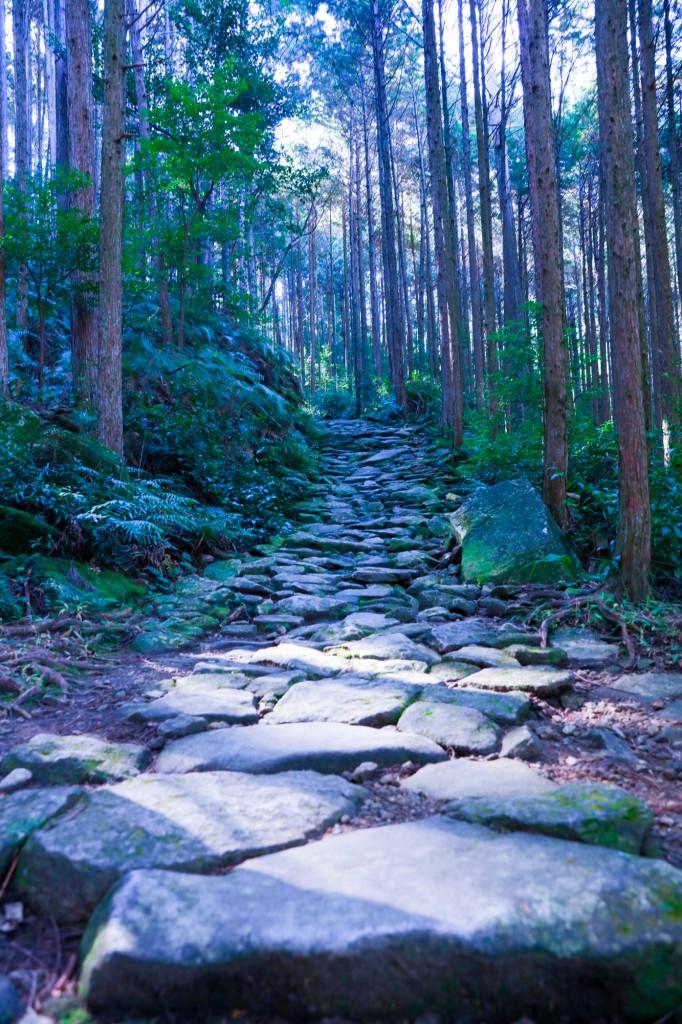 熊野古道 馬越峠 石畳4