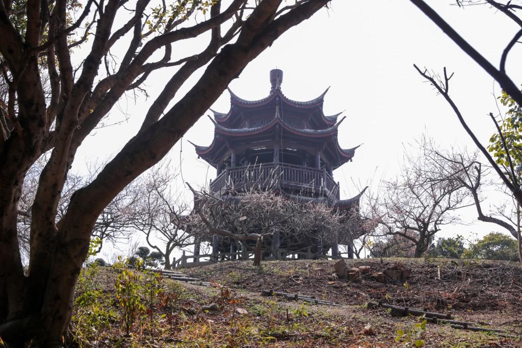 世界の梅公園 唐梅閣までの遊歩道3