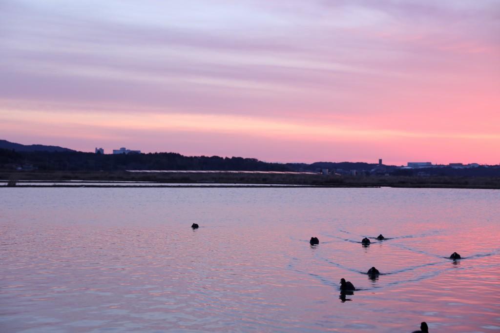 伊勢志摩エバーグレイズ 朝日の水辺と水鳥