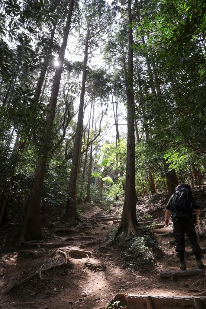 宮路山 森林浴コース3