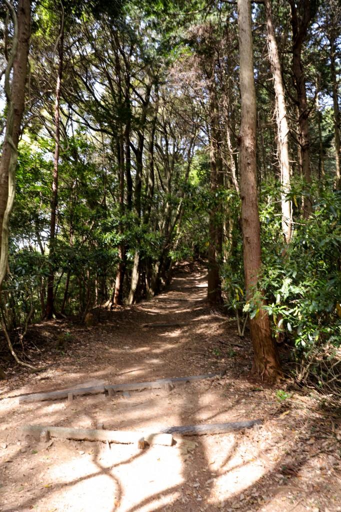 宮路山 森林浴コース4