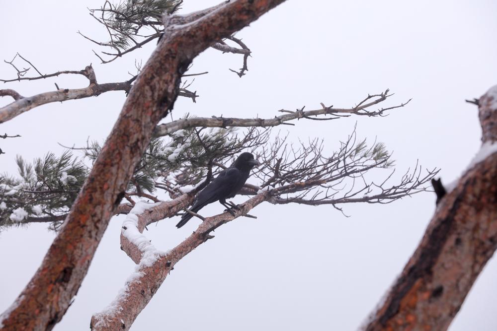 漢拏山 霊室ルート 鳥1