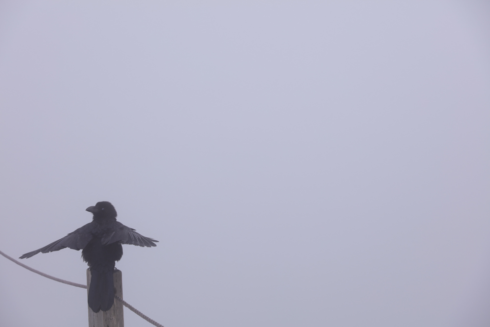 漢拏山 霊室ルート 鳥2