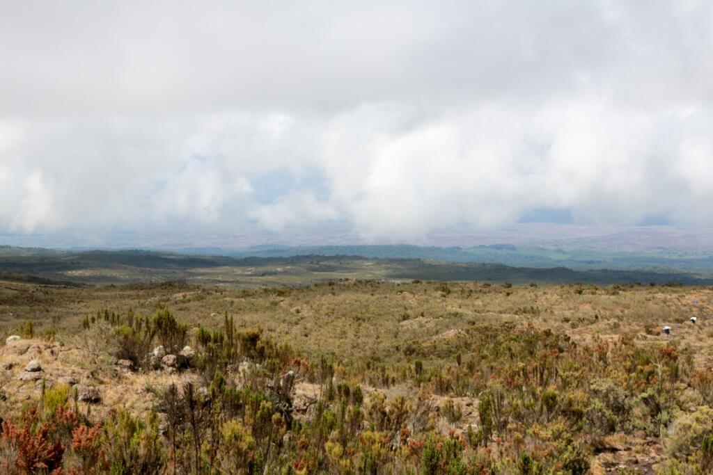 キリマンジャロ登山 ロンガイルート 森林限界を越える