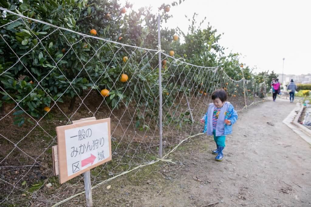愛知県東海市 みかん狩り クラインガルテン みかん畑への道