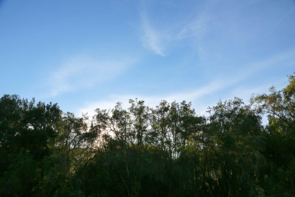 キリマンジャロ マンダラハットの朝