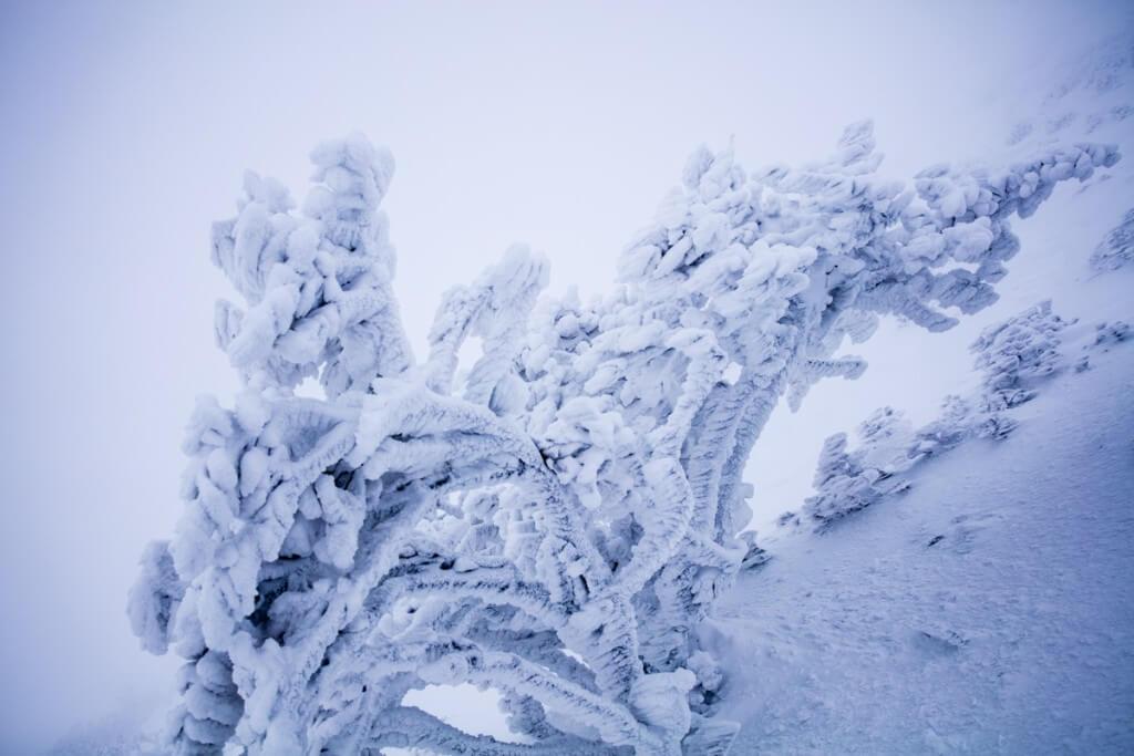 冬の伊吹山 樹氷1