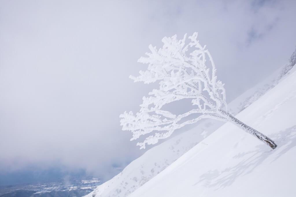 冬の伊吹山 樹氷2
