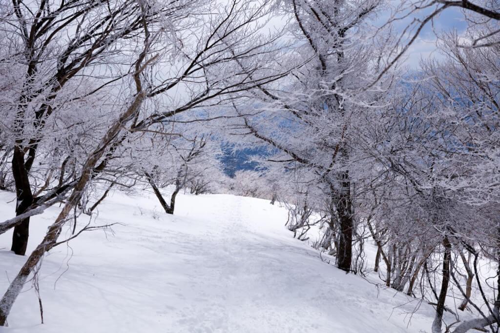 冬の伊吹山 樹林帯
