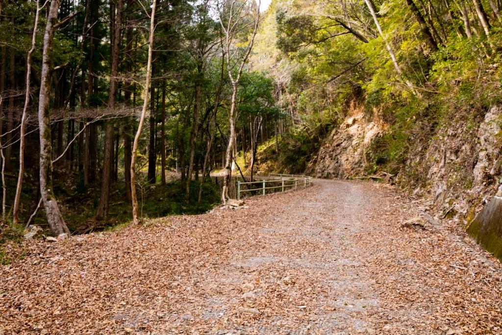 愛知県民の森 ハイキングコース 大津谷林道
