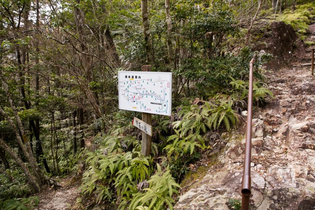 愛知県民の森 ハイキングコース 分岐