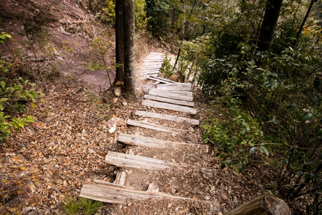 愛知県民の森 下石林道への下り