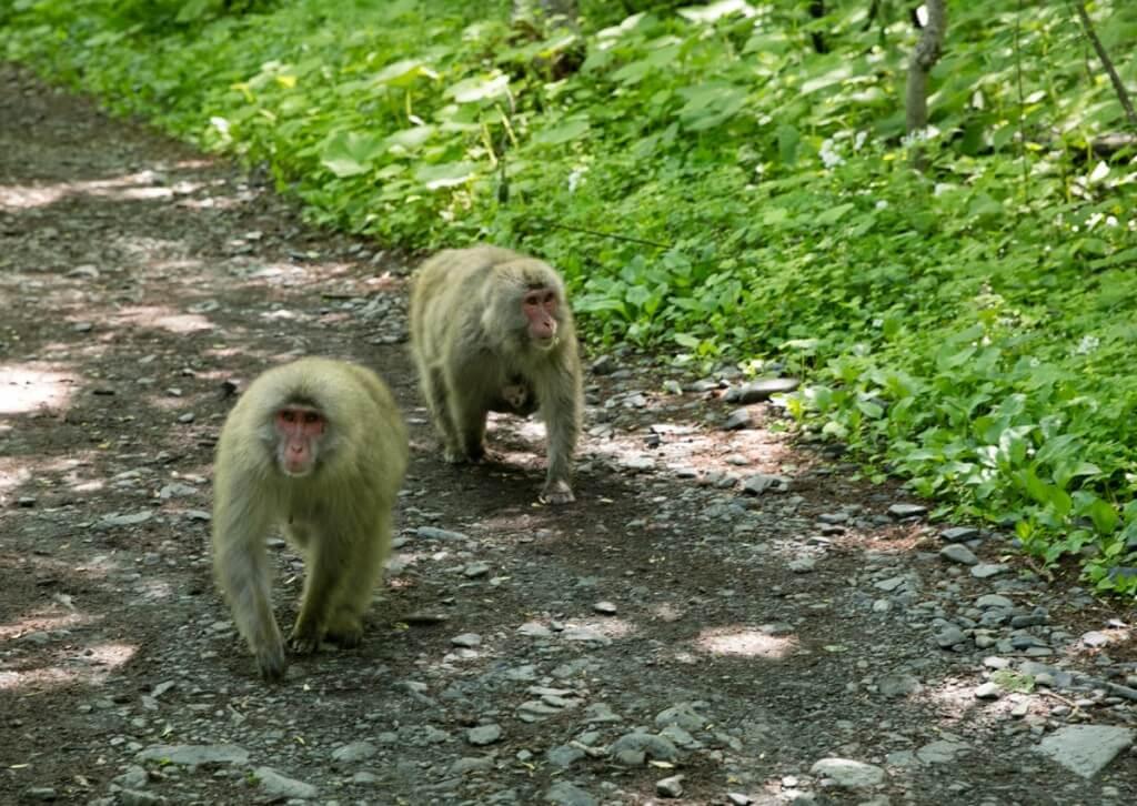 野生の猿1