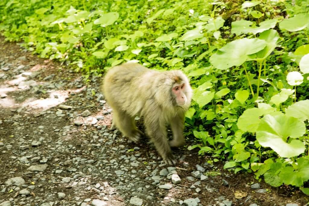 野生の猿2