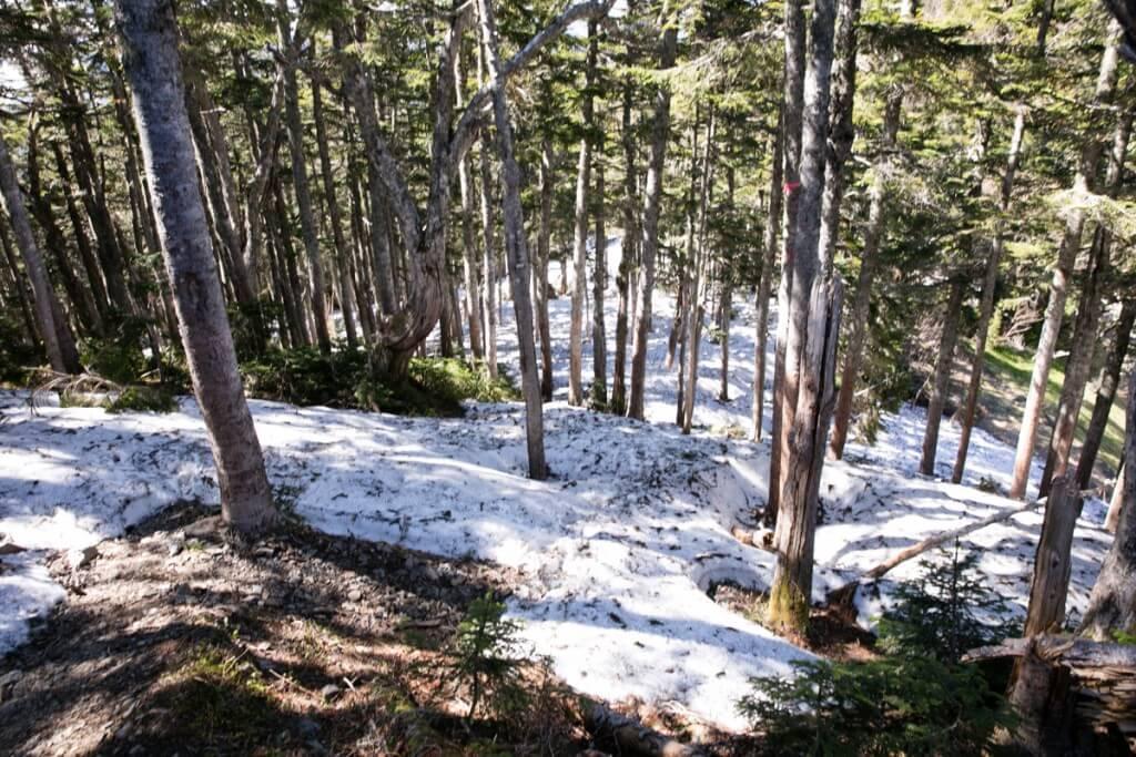 長塀尾根の残雪3