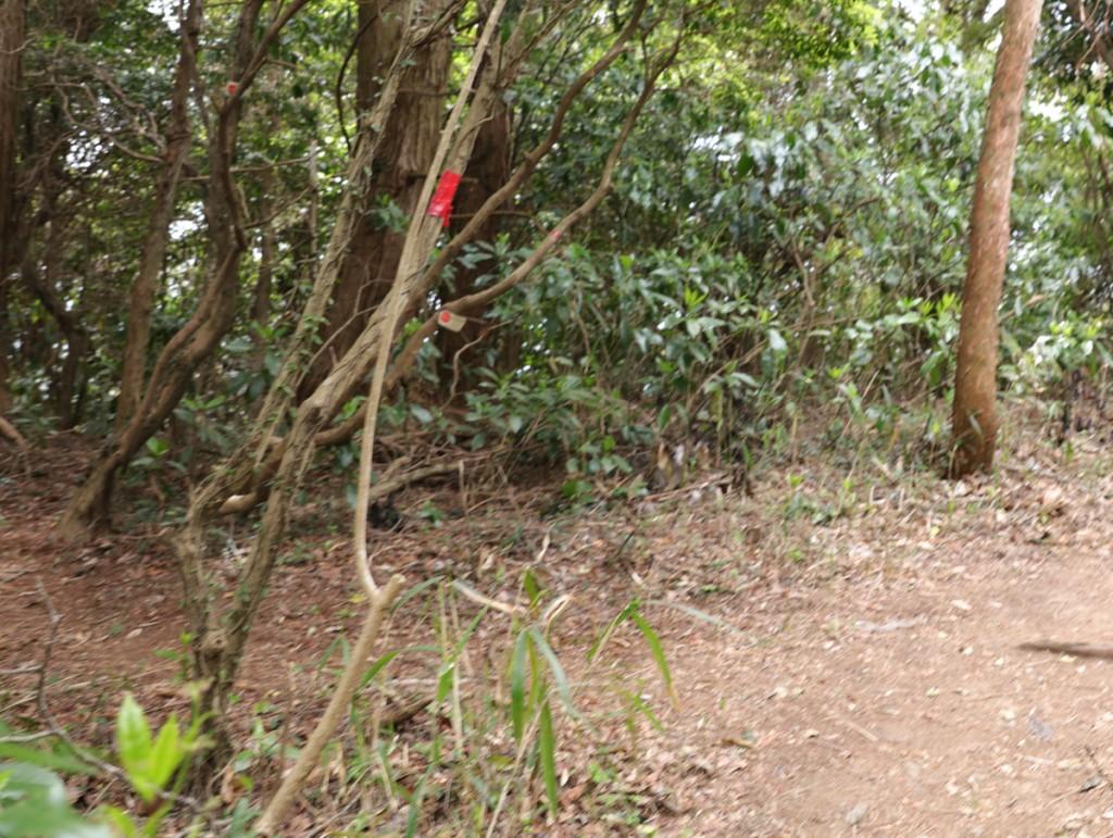 登山道 赤テープ