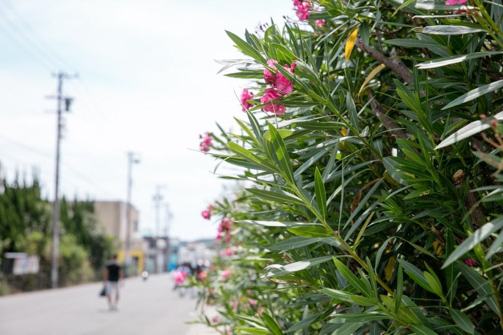 2018年正道会館新心館合宿 篠島で花の横を歩く