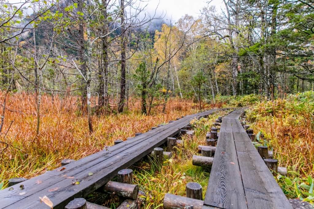 上高地 岳沢登山口への木道