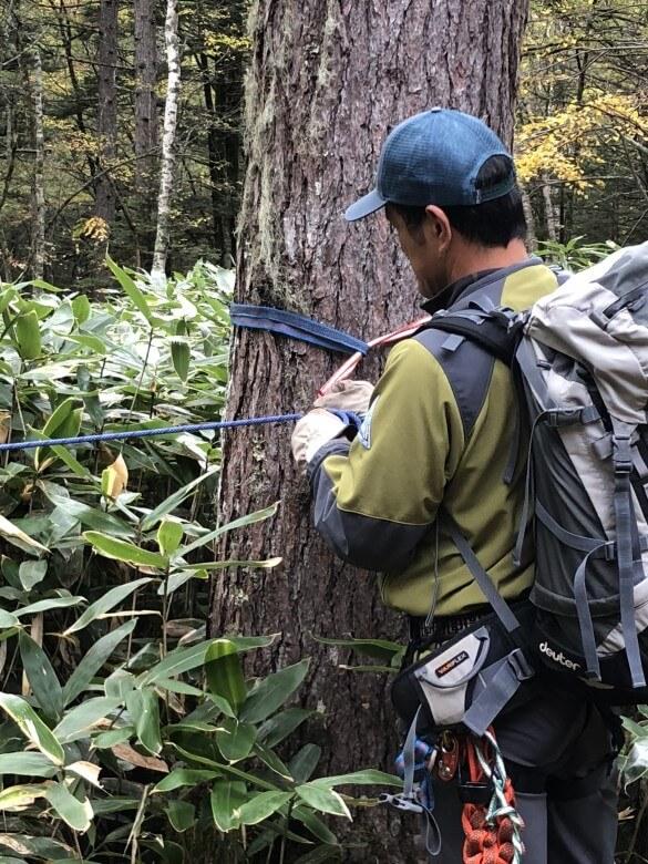 立ち木で固定ロープを張る
