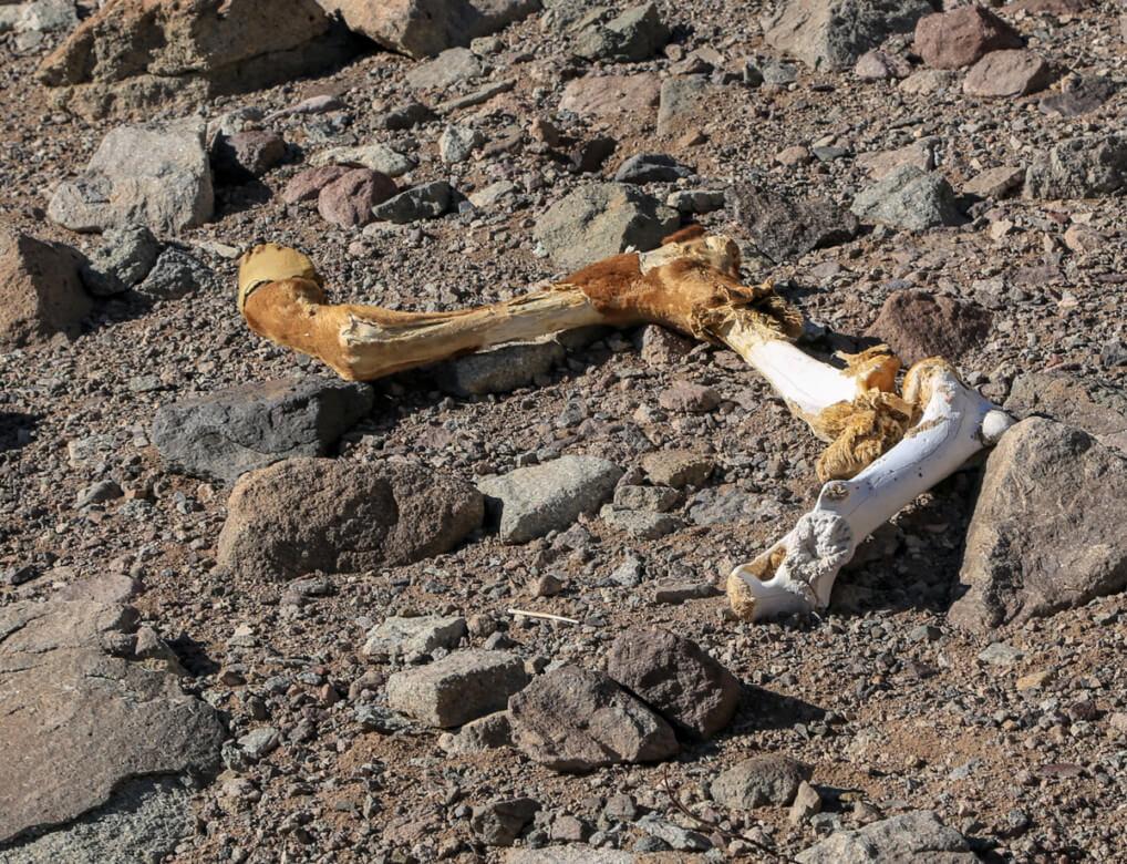 ムーラの骨
