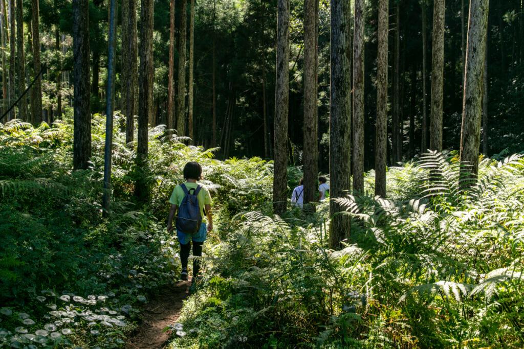和歌山県新宮市 桑ノ木の滝 ハイキングコース1
