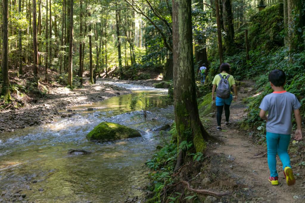 和歌山県新宮市 桑ノ木の滝 ハイキングコース2