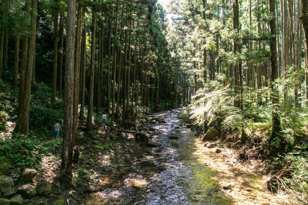 和歌山県新宮市 桑ノ木の滝 ハイキングコース3