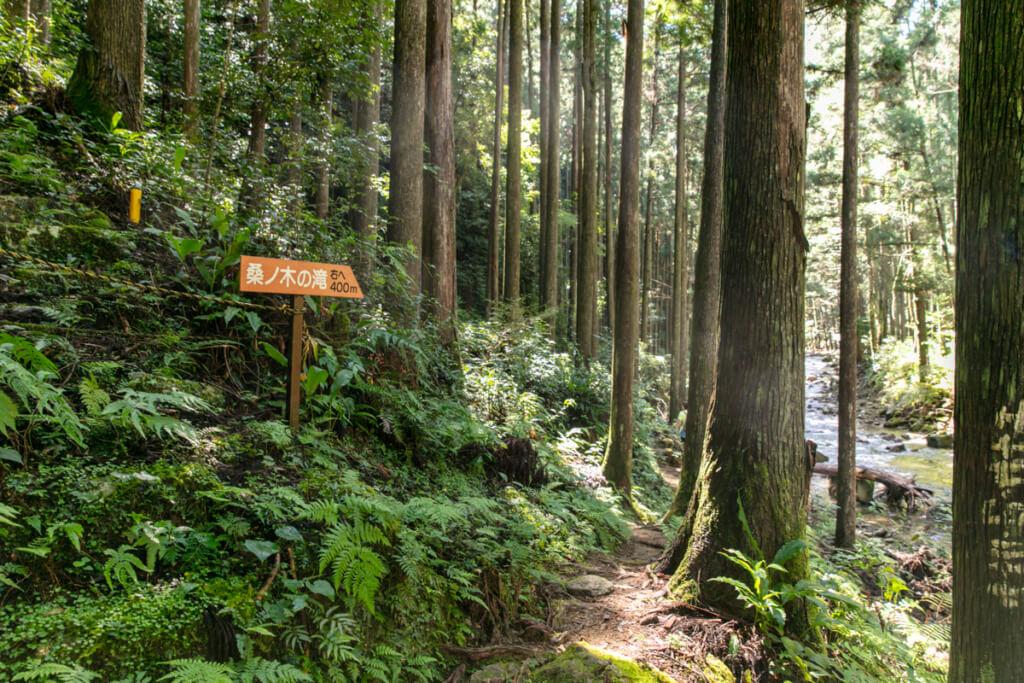 和歌山県新宮市 桑ノ木の滝 ハイキングコース4