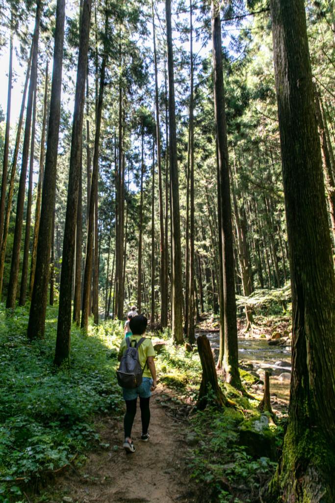 和歌山県新宮市 桑ノ木の滝 ハイキングコース5