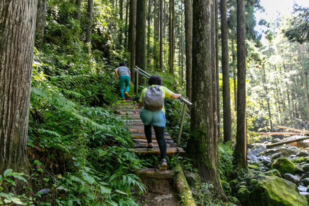 和歌山県新宮市 桑ノ木の滝 ハイキングコース6