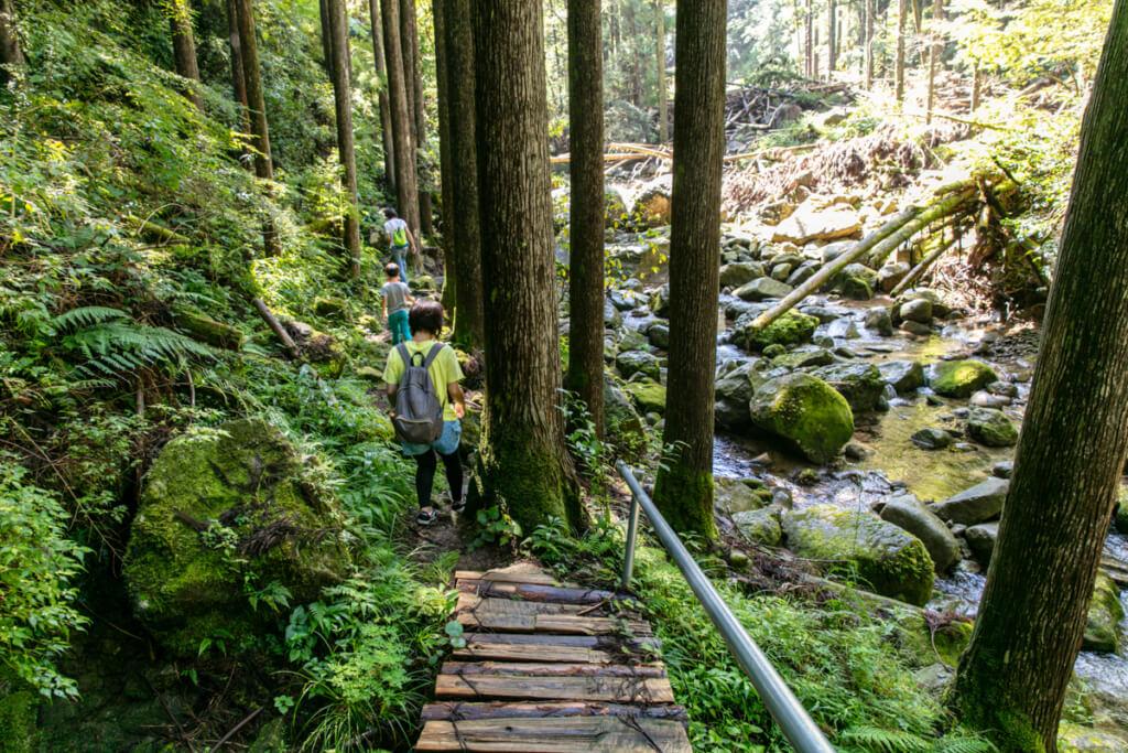和歌山県新宮市 桑ノ木の滝 ハイキングコース7