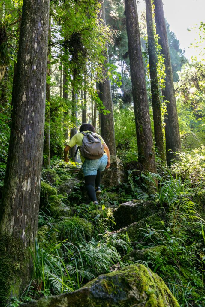 和歌山県新宮市 桑ノ木の滝 ハイキングコース8