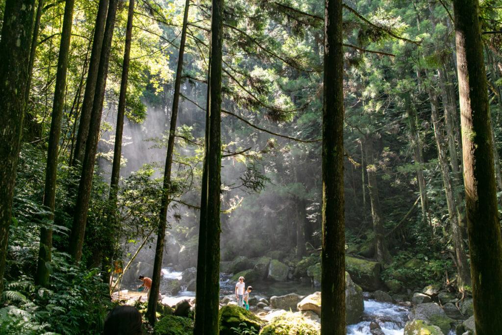 和歌山県新宮市 桑ノ木の滝 ハイキングコース終点