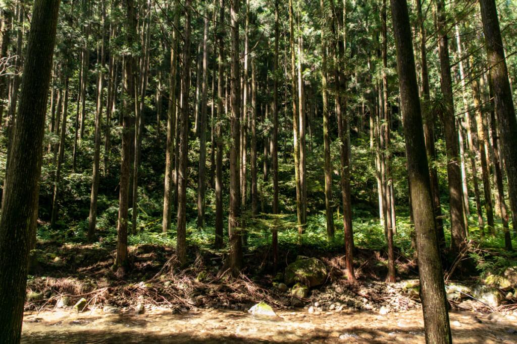 和歌山県新宮市 桑ノ木の滝 ハイキングコース9